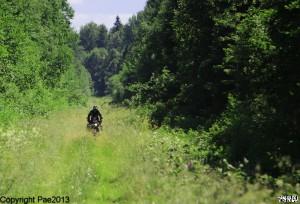 einsame Waldpfade